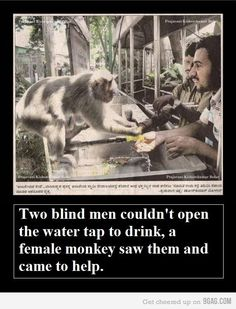 Faith in Humanity Restored. (Um...the men didn't do anything. The monkey did. So...faith in primates restored?)