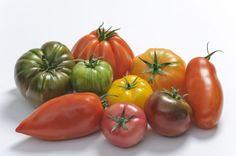 Assortiment de tomates Saveurs d'Antan