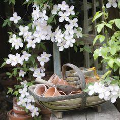 Climbing plants at croi - Wood Decora la Maison Gardening Magazines, Gardening Books, Gardening Tips, Organic Gardening, Potager Garden, Balcony Garden, Garden Plants, Magic Garden, Garden Art