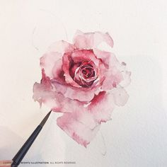 An exquisite water colour rose in red, pink and white. Watercolor Rose, Watercolor Print, Watercolour Painting, Watercolors, Painting & Drawing, Iris Painting, Illustration Blume, Botanical Art, Art Tutorials