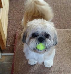 Nobody is getting this little ball. Nobody will get it cos hes going to sleep with it in his mouth,bless x
