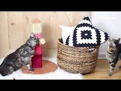 Make A Cat Scratch Post That's Actually Not Ugly   Cuteness