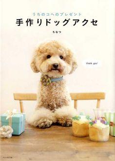 puppy accessories