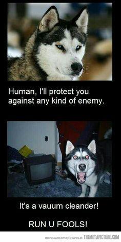 Hahaha my dog is like this XD