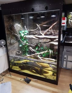 V melinus enclosure Reptiles Reptile cage Snake Reptile Cage, Reptile House, Reptile Room, Terrariums, Decor Terrarium, Reptile Terrarium, Lizard Habitat, Turtle Habitat, Reptile Habitat