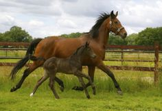 Jasmine la Perle (2014) filly by Rousseau x elite sport Jazz (1,5 week old)