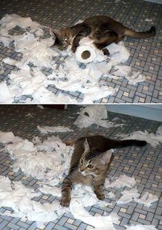 13. katt-papper