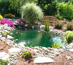 My backyard goldfish pond.