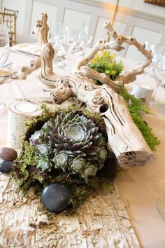 Tablescape featuring live succulents, live moss, birch bark, river rock, and grapevine