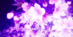 sakura tree gifs | Tumblr