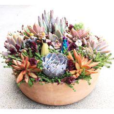 Nice colorful succulent arrangement by Marissa Arbolario Engoy