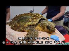미니타큐멘타리 12부(거북이 기생따게비) Good People, Turtle, Youtube, Turtles, Tortoise, Youtubers, Youtube Movies