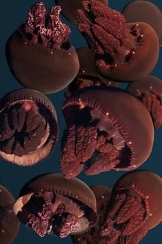 Maroon Blubber jellies at the Monterey Bay Aquarium. https://www.facebook.com/montereybayaquarium?ref=stream