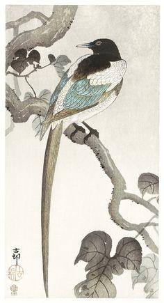 Magpie on tree branch - by Ohara Koson Original from the Rijks Museum. Japanese Tattoo Art, Japanese Painting, Magpie Tattoo, Ohara Koson, Oriental, Art Asiatique, Bird Illustration, Art For Art Sake, Japan Art