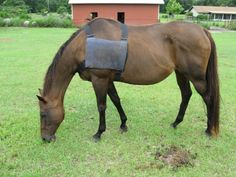 Picture of Ice pack vest for horse