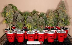We don`t have the opportunity every day to interview a cannabis artist so it is very exciting to have Stunted here who kindly agreed to answer some questions specially for Autoflower Portal. Weed Plants, Marijuana Plants, Air Plants Care, Plant Care, Cannabis Wallpaper, Weed Buds, Cannabis Cultivation, Green Farm, Gardens