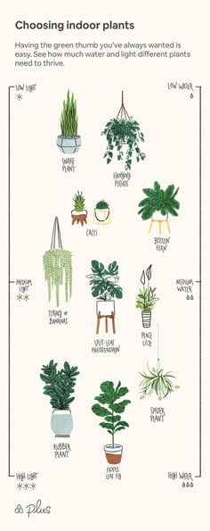 Zimmerpflanzen auswählen Best Picture For big house plants decor For Your Taste You are looking for something, and it is going t Bedroom Plants Decor, House Plants Decor, Plant Decor, Big House Plants, Best Plants For Bedroom, Indoor Garden, Indoor Plants, Garden Plants, Different Plants