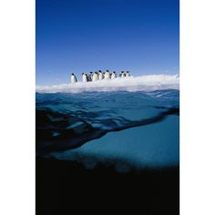 Extreme diver Norbert Wu's journey into the Antarctic underworld. Emperor penguins on the ice edge.