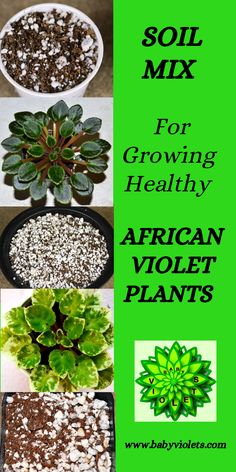 African Viole soil should not be compacted, heavy, dense or packed hard, this will prevent root penetration through the soil, leading to poor root growth. Garden Plants, Indoor Plants, House Plants, Flowering Plants, Garden Seeds, Indoor Garden, Potted Plants, Growing Flowers, Planting Flowers