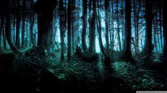 Feu de forêt, sombre matin Wallpaper
