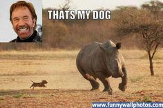 That would be Chuck Norris' dog
