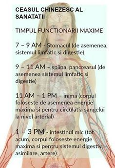 Ceasul chinezesc al sanatatii traseaza practic bio-ritmul organismului si ne arata cum energia circula prin corpul nostru, variind la fiecare doua ore si influentand diverse parti ale corpului. Health Tips, Health Care, Arthritis Remedies, Traditional Chinese Medicine, Shake Recipes, Science And Nature, Workout Challenge, Good To Know, How To Stay Healthy