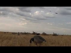 goose hunting weapons