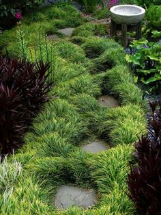 Mondo grass & stepping stone path