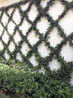 On neighbors garage wall in backyard The Zhush: Paradise Is A Walled Garden