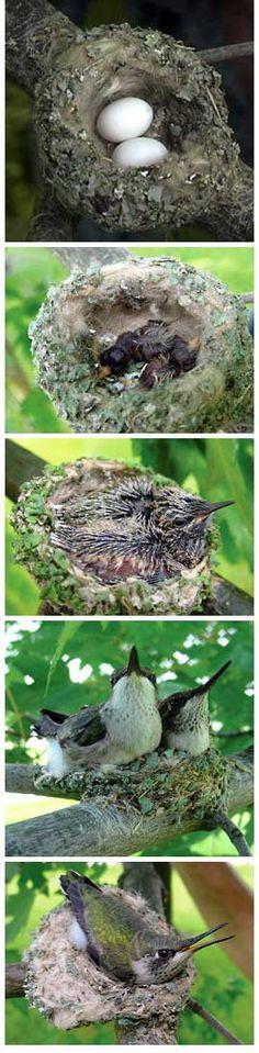 http://www.birds.cornell.edu/Publications/Birdscope/Spring2008/spider_silk