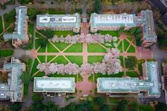 The University of Washington, aerial view. Cherry trees in bloom
