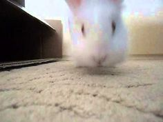 Cute My Rabbit
