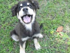 Conroe, TX: URGENT! 46 pet Intakes & Daily Stats 4.4.14. Click photo to see all 46 pets we took in on 4.4.14. Now this is one happy boy (A232156)... Look at this face and he immediately makes you feel happy. Imagine coming home to him each evening. Talk about a heart that can melt your cares away! This loverboy came in as a stray so if no one is looking for him he will be adoptable. Sunday.http://www.mcaspets.org/2/post/2014/04/intakes-daily-stats-4414-46-pets.html