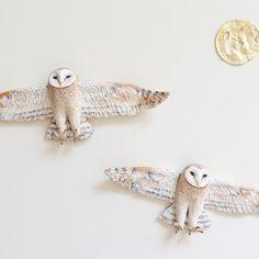 Twin barn owls ✨