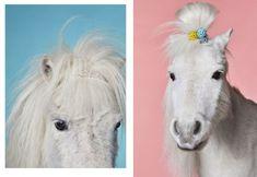 Online portfolio of beauty and fashion photographer Frauke Fischer based in Berlin Portfolio, Goats, Photographers, Pony, Horses, Gallery, Animals, Pony Horse, Animales