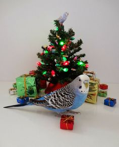 Budgie Parakeet, Budgies, Blue Budgie, Funny Birds, Cute Birds, Christmas Animals, Christmas Cats, Tiny Dinosaur, Funny Parrots