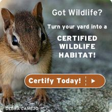 Certify Your Wildlife Garden Whether you have an apartment balcony or a 20-acre farm, you can create a garden that attracts beautiful wildlife and helps restore habitat in commercial and residential areas. By providing food, water, cover and a place for wildlife to raise their young, you not only help wildlife, but you also qualify to become an official Certified Wildlife Habitat™ and join the nearly 140,000 sites across the country.