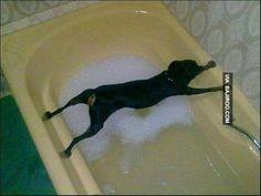 funny dog NOT in Bath Tub