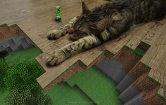 wow nice mix of the amazing real world cat and the fun of minecraft V Games, Video Games, Xbox, Funny Cats, Funny Animals, Amazing Minecraft, Minecraft Funny, Nintendo, Minecraft Wallpaper