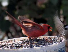 Get off of my feeder!