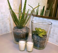 bathroom friendly planting. succulent. aloe vera. rocks. #bathroom #plant