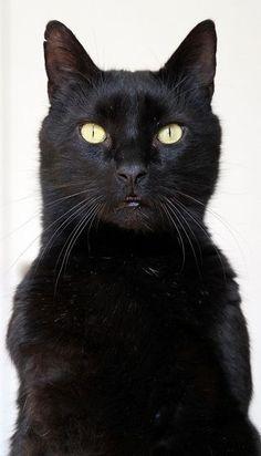 ڿڰ(Aussiegirl  #Cats