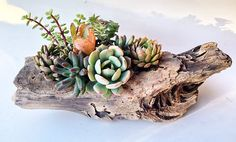 Succulent Driftwood Planter Pastel Small by SucculentsSoSweet