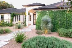 Making a space that works with the local climate Ficus Pumila, Evergreen Hedge, Eden Design, Fine Gardening, Garden Of Eden, Garden Photos, Modern Landscaping, Landscape Lighting, Outdoor Projects