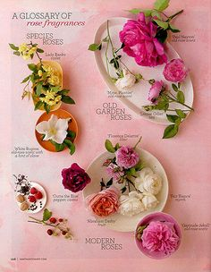 a glossary of rose fragrances.