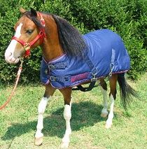 Miniature Horse and Pony Waterproof Blanket-www.ozarkcanada.com