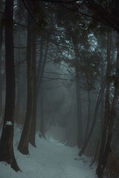 Elegy for a dream Beautiful World, Beautiful Places, Dark Paradise, Nature Aesthetic, Wilderness, Mists, Paths, Nature Photography, Photography Tips