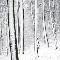 WINTER FOREST  #chrisherzog #winter #forest #snow #tree #cold