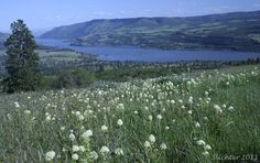 View southeast towards the Columbia River from western Tracy Hill, Catherine Creek. Washington.