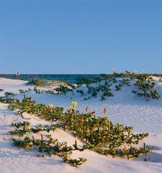 Hibiscus Coffee & Guesthouse in Grayton Beach, Florida | B&B Rental
